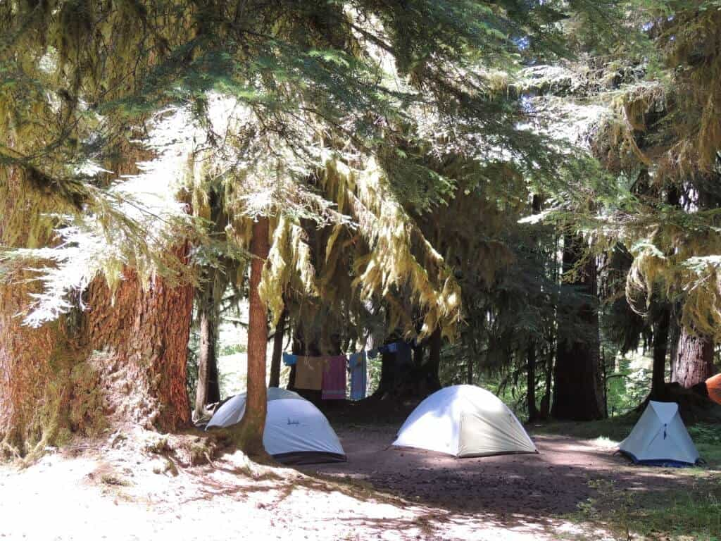 Several tents set up under a canopy of trees in Sol Duc Campground, Olympic National Park.