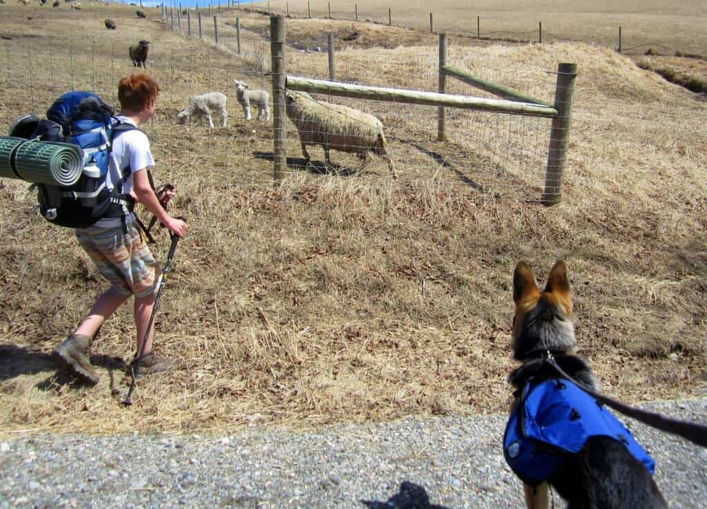 Hiking through the farm at Merck.