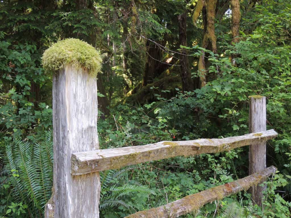 A mossy fencepost on Kestner Homestead Trail in Olympic National Park.