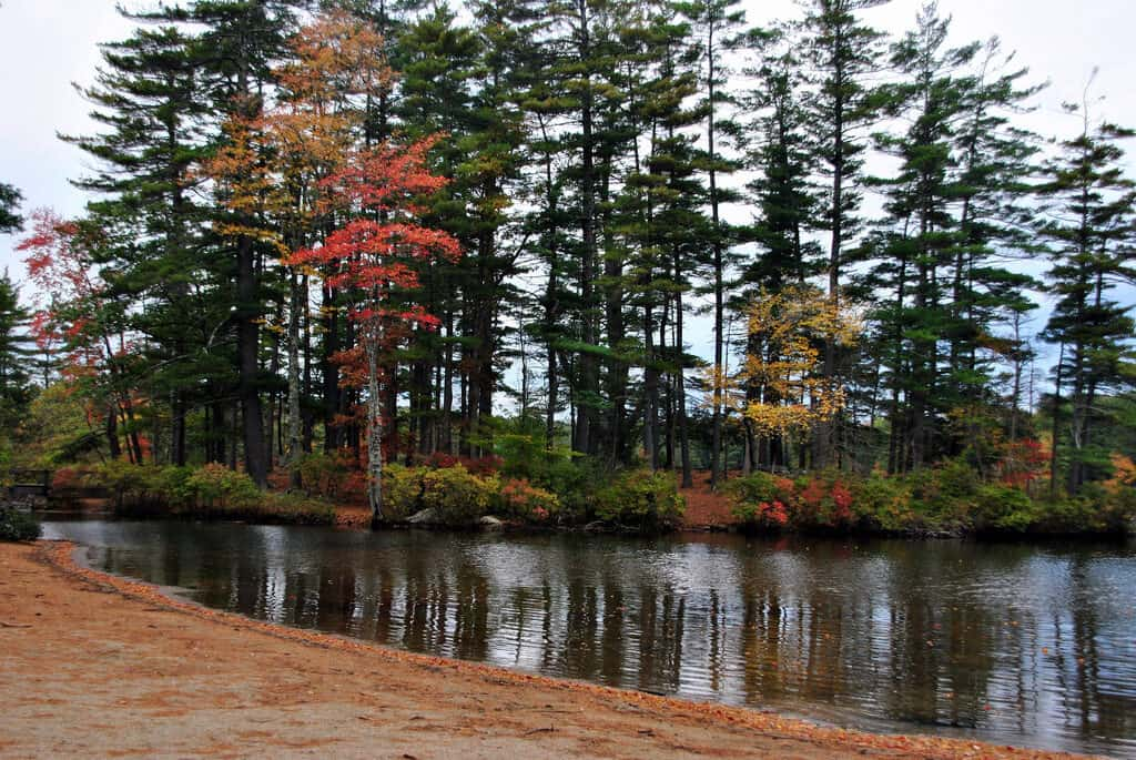 The beach at Pawtuckaway State Park in autumn by Angela N.