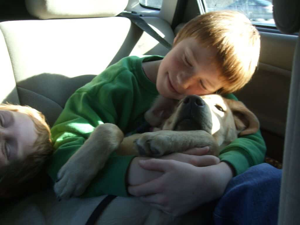 two young boys snuggle in the backseat of a car with a large dog.