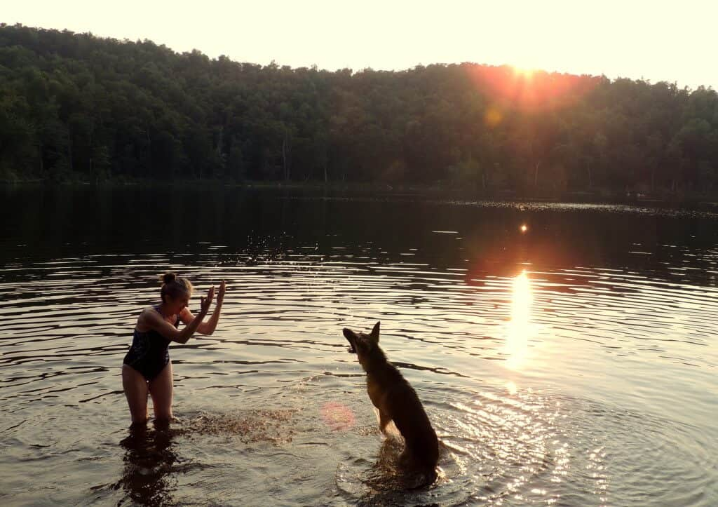 a woman and a dog play together in a lake at sunset.