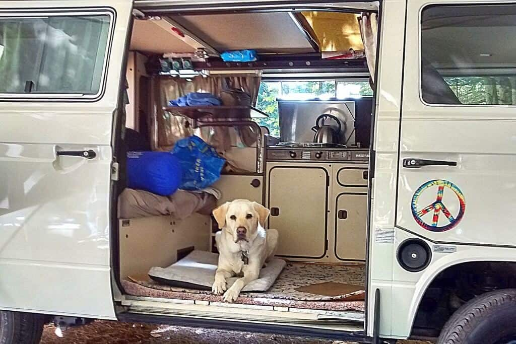 a yellow Labrador lies calmly on a dog bed inside of a Volkswagen camper.