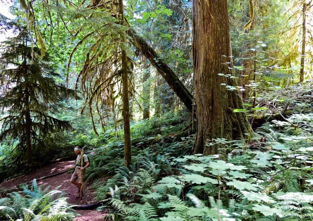 A dark forest in North Cascades National Park in Washington.