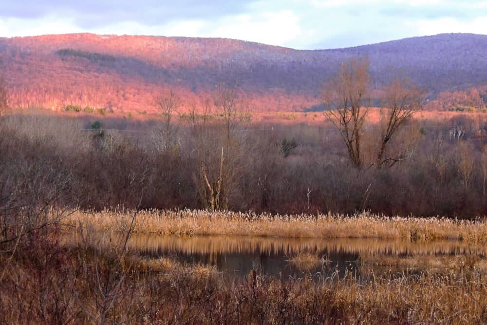 A late day scene in winter - a marshy pond with yellow grass surrounding it. Pink mountains in the background.