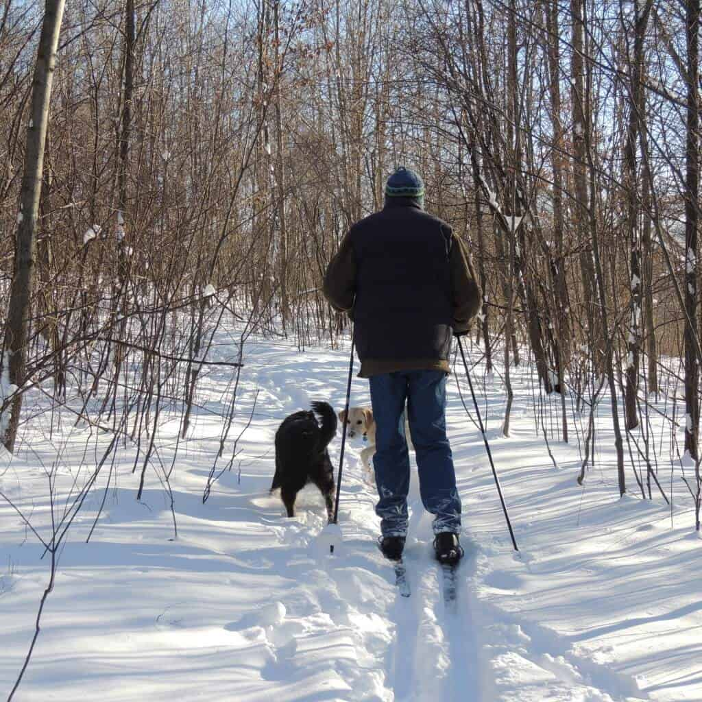 A man cross country skiing with dogs. He is skiing through a hardwood forest with a black dog and a yellow lab.