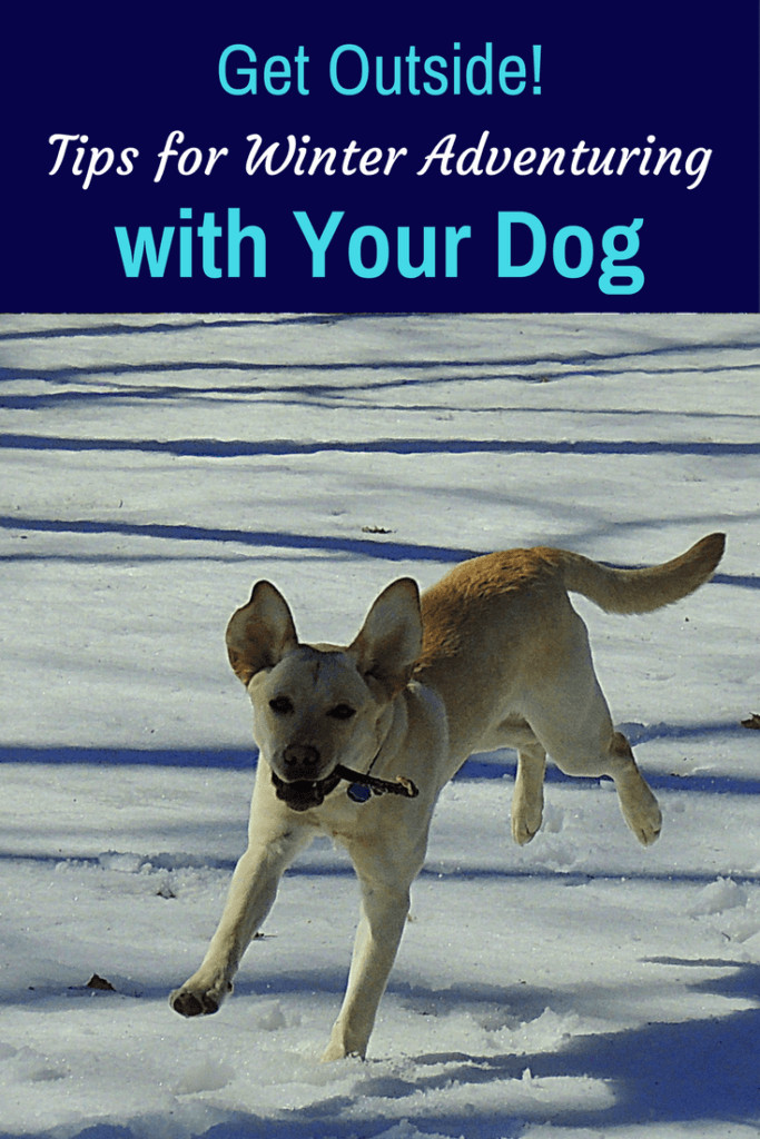 A yellow lab runs through the snow. Caption reads: Get Outside! Tips for Winter Adventuring with Your Dog