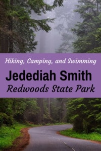 A road winds through Jedediah Smith Redwoods State Park