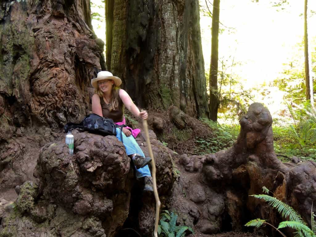 A woman sits in the crook of a tree in Jedediah Smith Redwoods State Park