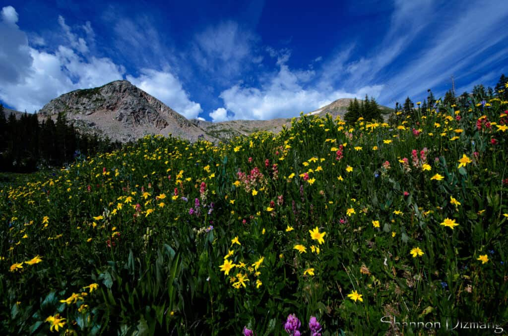 Wildflower Hike Colorado