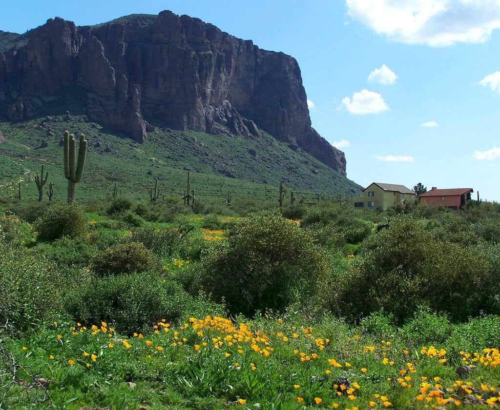 Wildflower Hikes Arizona