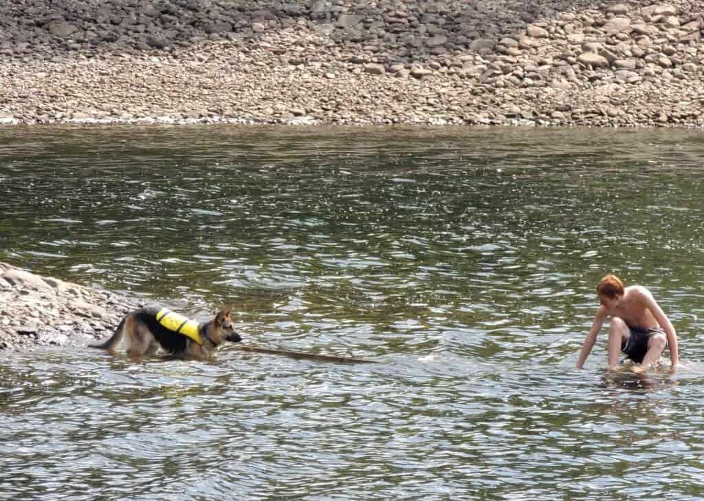 Teaching a German Shepherd to swim