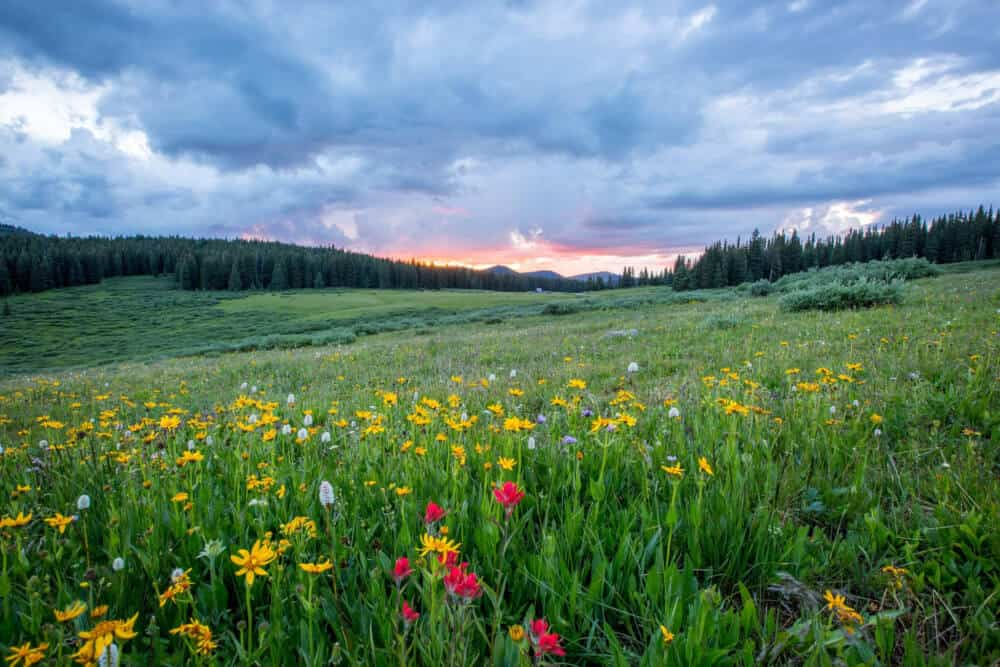Wildflower Hikes in the USA
