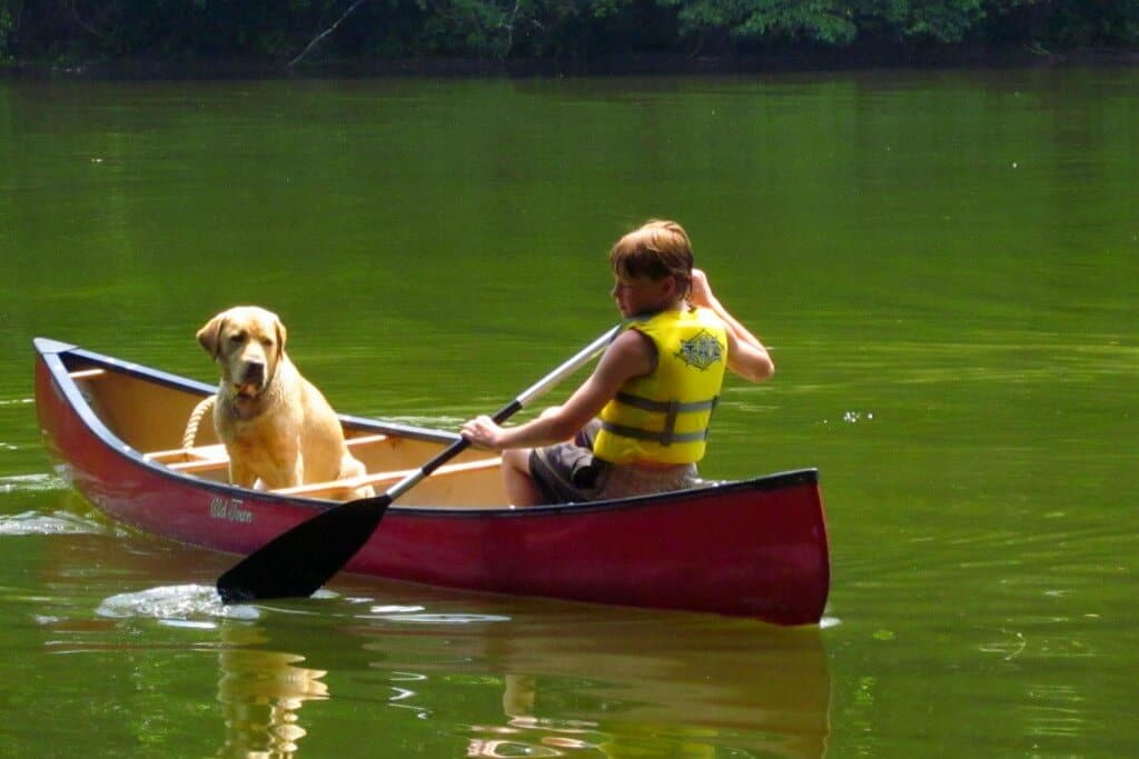a boy paddles a red canoe with a yellow Labrador.
