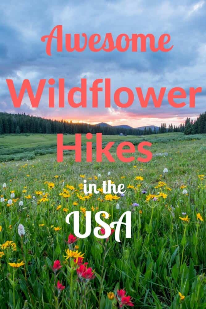 A field of wildflowers in the USA