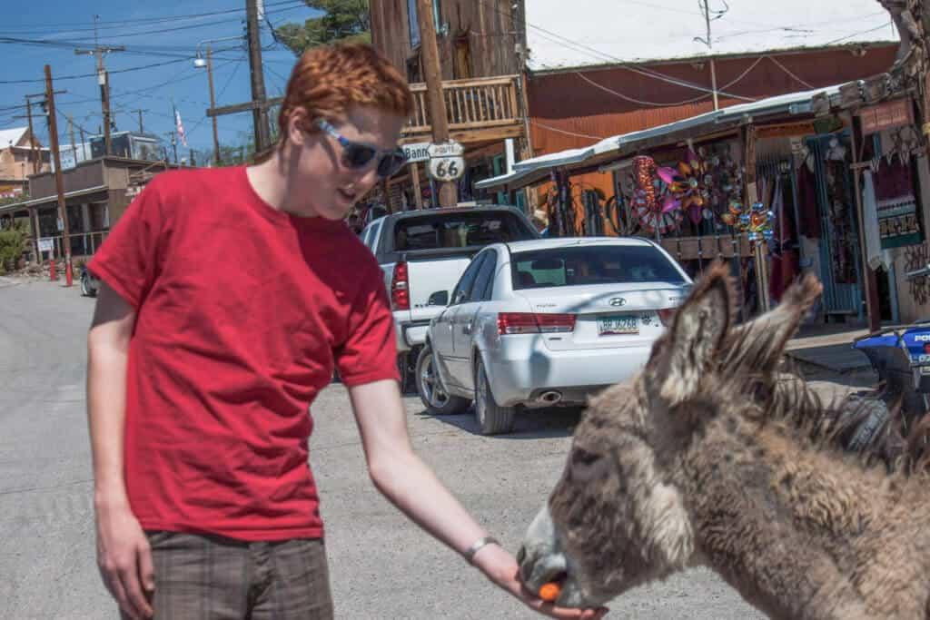 A boy feeds a feral burro a carrot in Oatman, AZ
