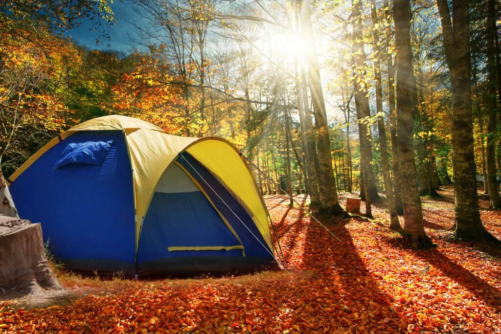 A blue and yellow tent in an autumn forest.