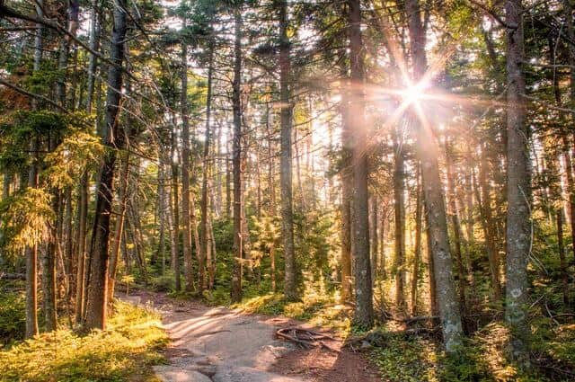 sunset on a hiking trail in Mt. Ascutney State Park in Vermont