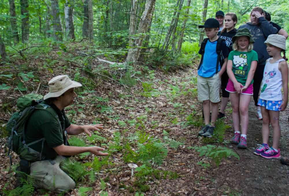 Checking out a poisonous mushroom at Little River State Park