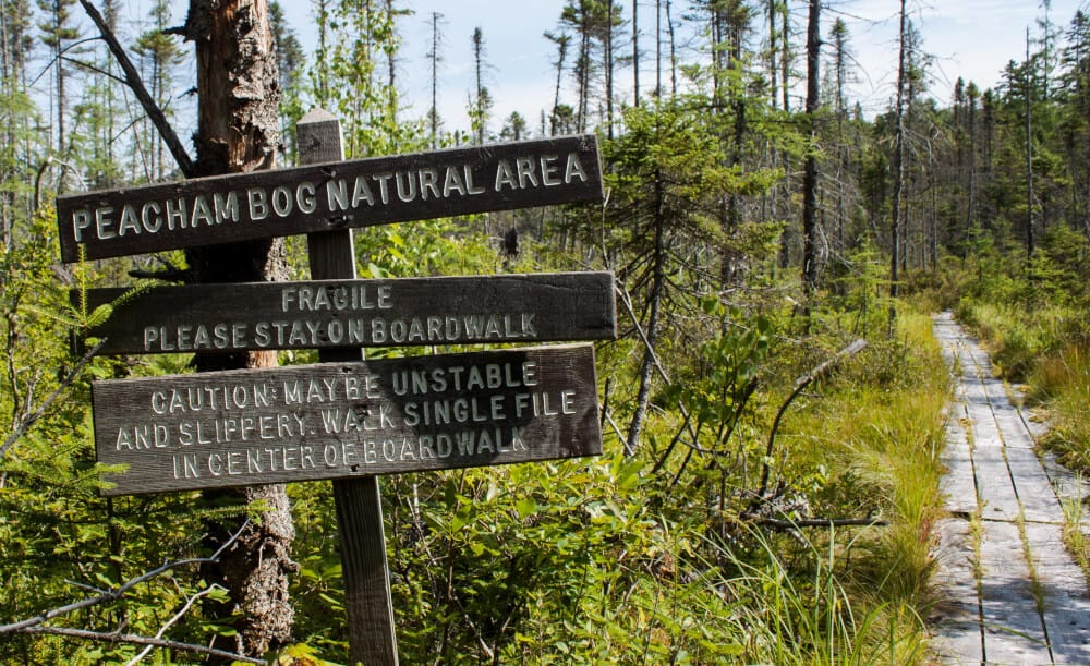 Peacham Bog Groton State Forest