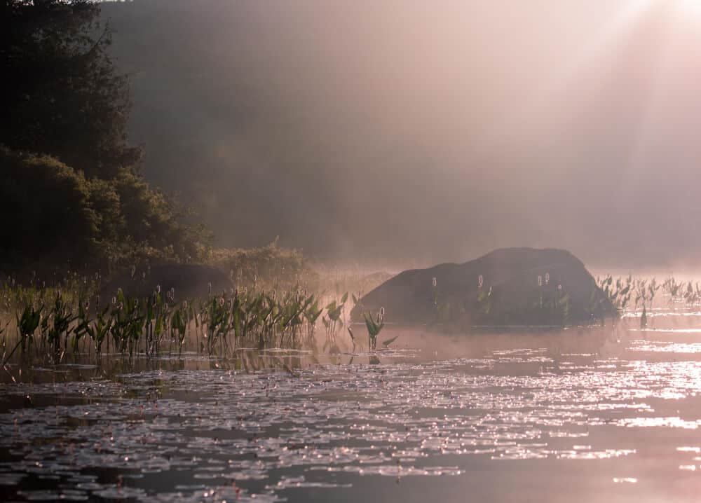 A foggy sunrise over Ricker Pond in Vermont.