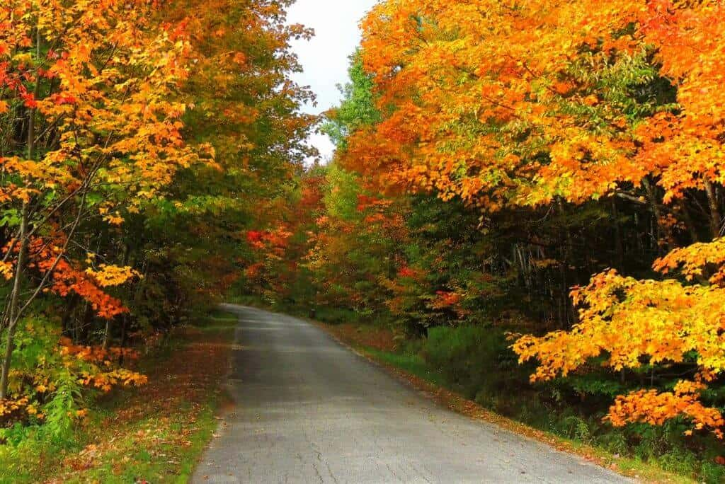 Gorgeous hardwood maple trees during fall foliage season at Woodford State Park