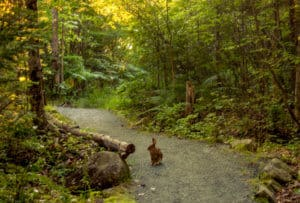 Get Outside: Easy Hiking in Northern Vermont