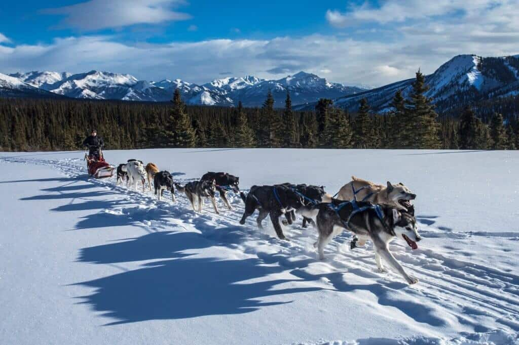 A team of sled dogs runs through the snow with mountains in the background.