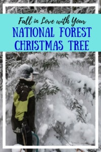 A boy is choosing a Christmas tree from the national forest