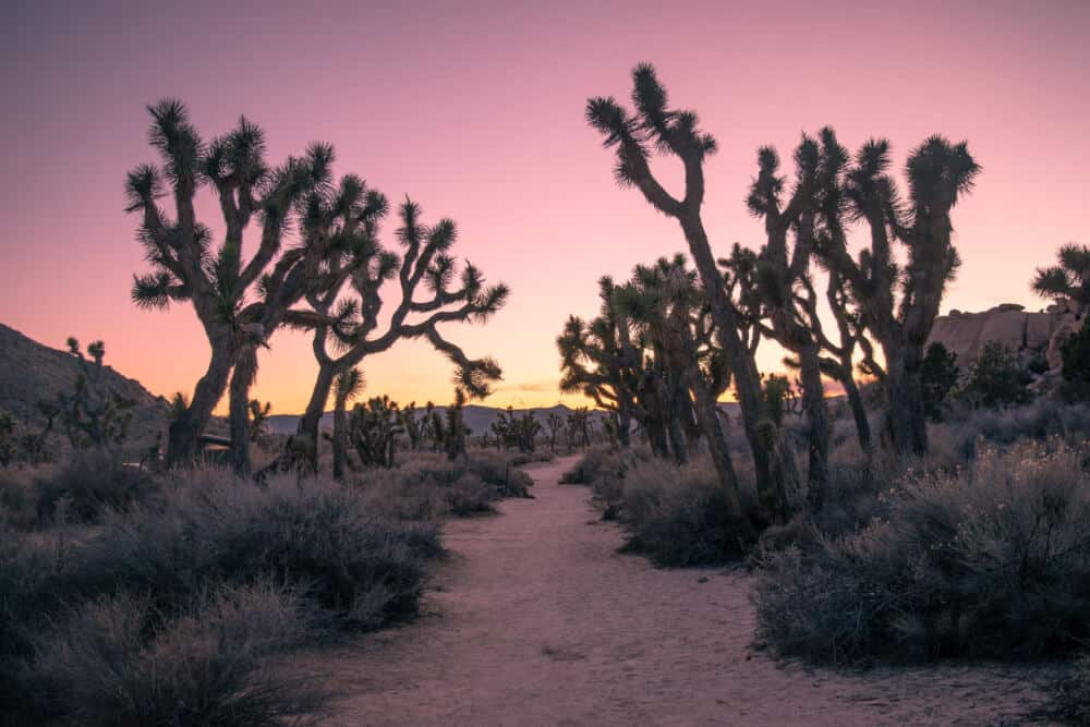 Exploring Joshua Tree National Park with Kids