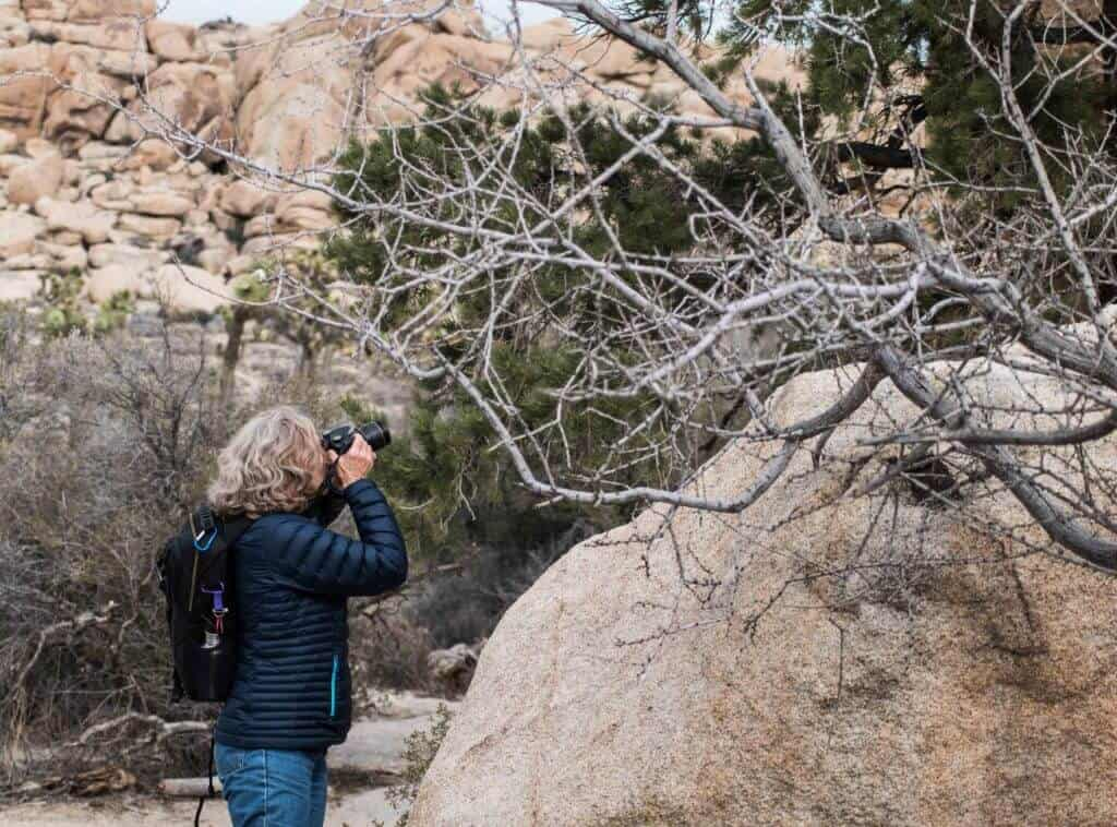 A woman aims a camera at a hidden bird in Joshua Tree National Park.