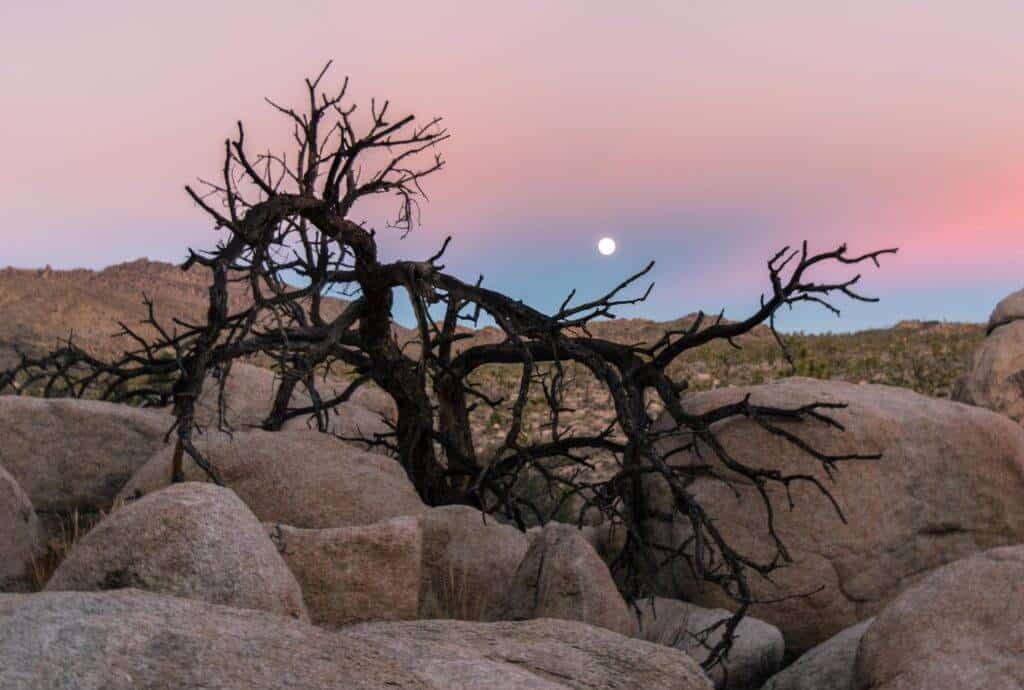 Moonrise near Wonderland Ranch, Joshua Tree National Park, California