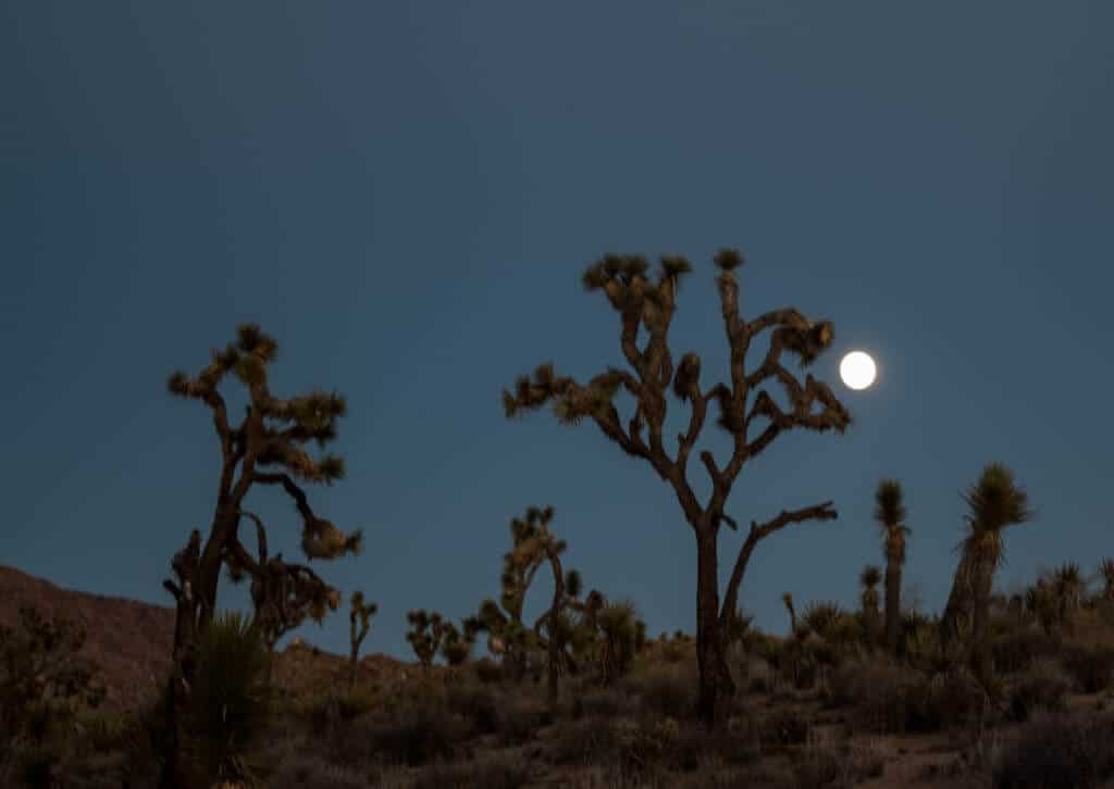 Full moon rising on the Wall Street Mill Trail in Joshua Tree National Park