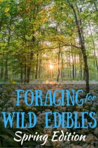 A field of wild ramps with the caption: Foraging for Wild Edibles, Spring Edition