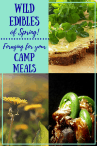 A collage of spring wild edibles with the caption: Wild Edibles for Spring, Foraging for Food in the Wild