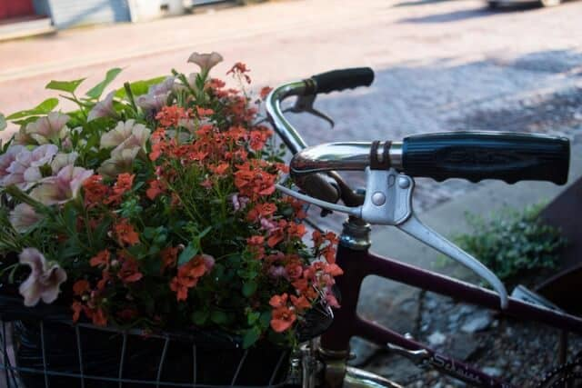 A bike basket full of flowers in Marietta, Ohio