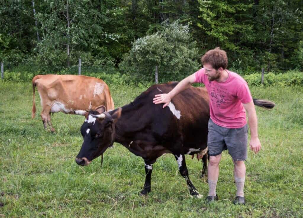 Evan gives one of his cows a friendly scratch at Mountain Home Farm in Vermont.