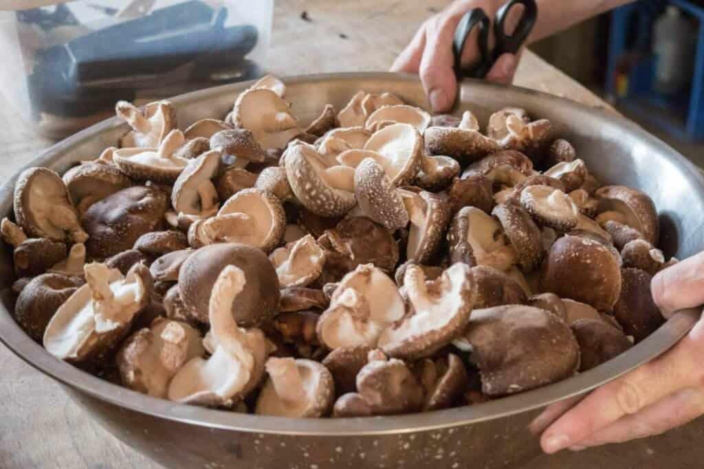 A large bowl of shiitake mushrooms