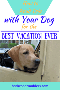 a yellow lab looks out a truck window. Caption read: How to Road Trip with your dog for the best vacation ever.