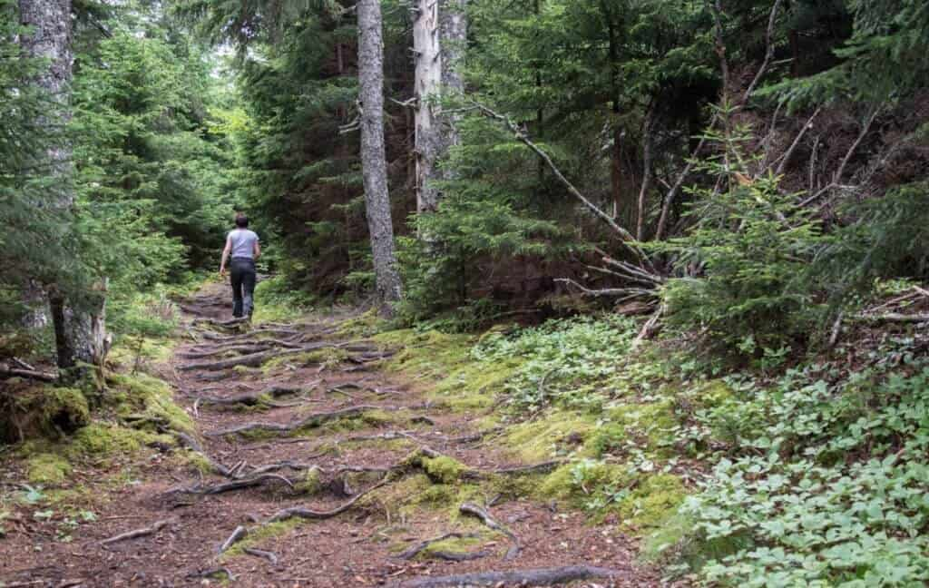 hiking the Kinnie Brook Trail in Fundy National Park