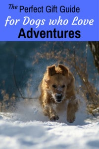 A golden retriever running through the snow. Caption: The Perfect Gift Guide for Dogs who Love Adventures