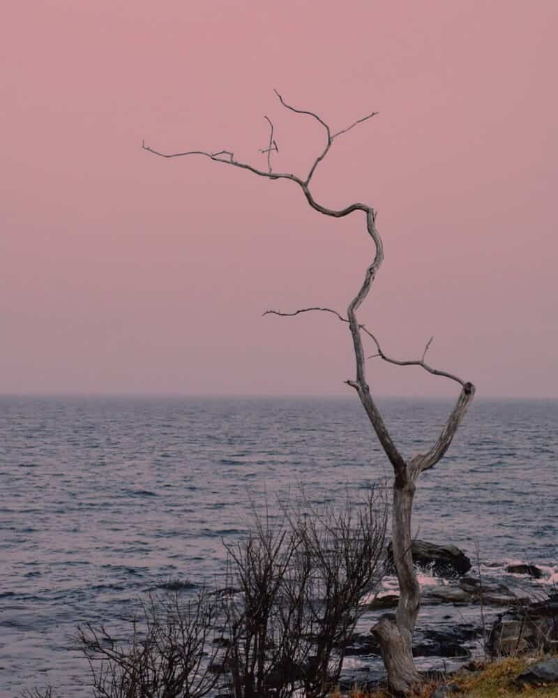 A lonely tree at Odiorne State Park in Rye, New Hampshire.