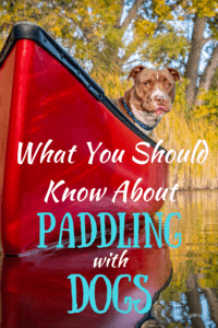 a pit bull sits quietly in a red canoe. Caption reads: What you should know about paddling with dogs