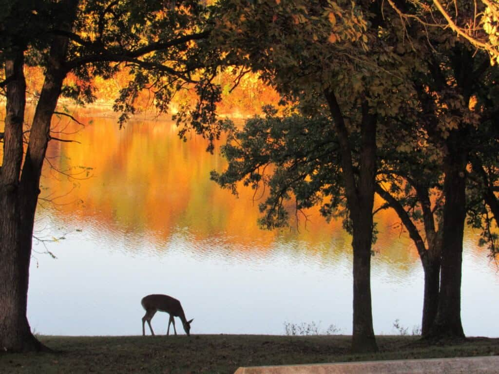 A deer grazes next to a lake in Thousand Hills State Park