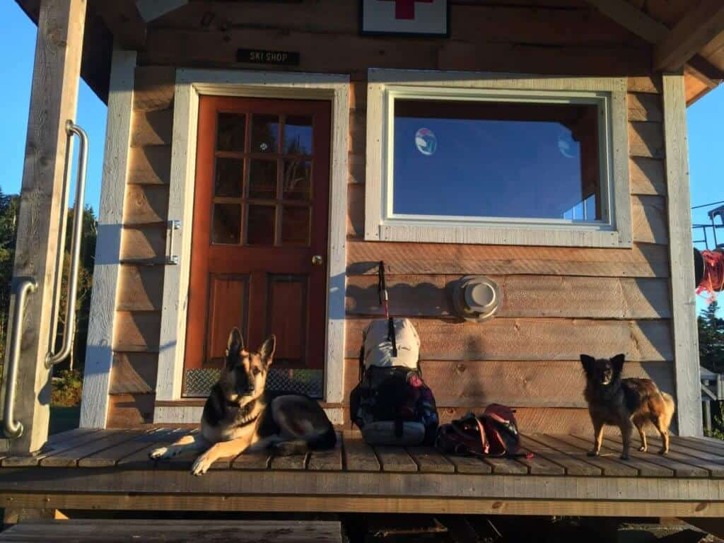 A German Shepherd and a small terrier relax on the deck of a house next to a hiking backpack.