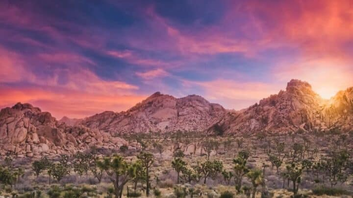 sunset in Joshua Tree National Park, California.
