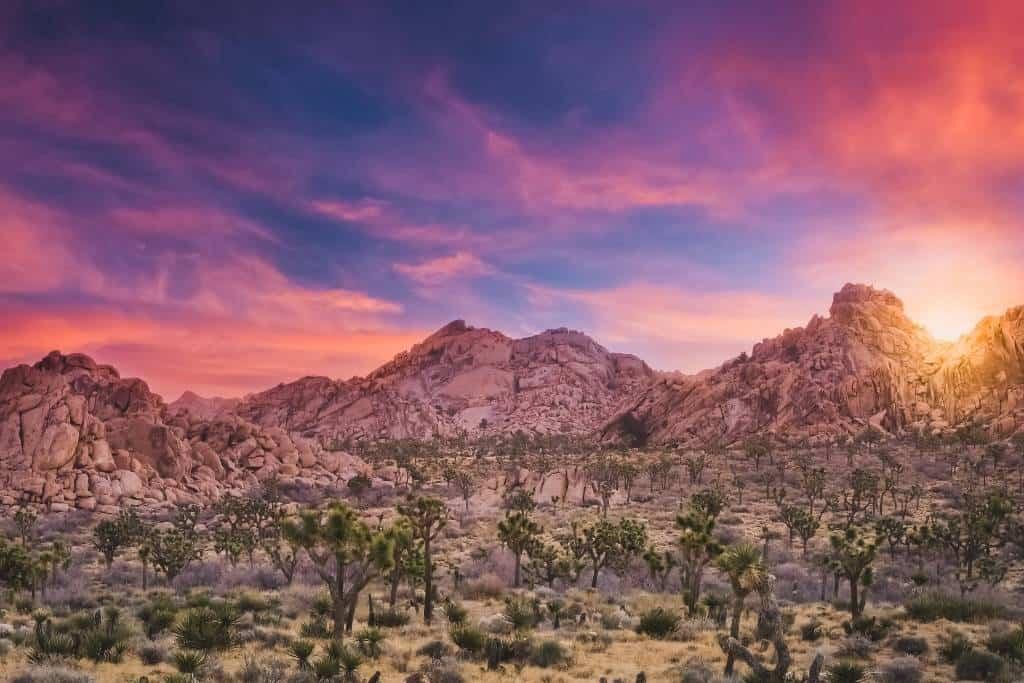 sunset in Joshua Tree National Park, California.
