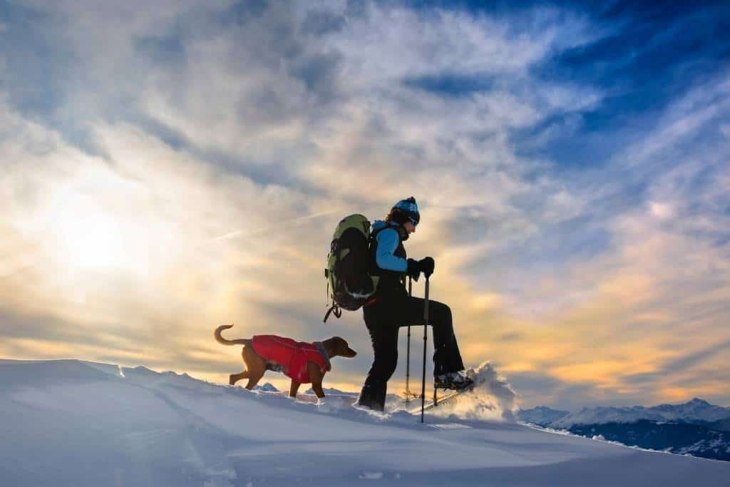 A person snowshoeing with a dog on a snowy mountain