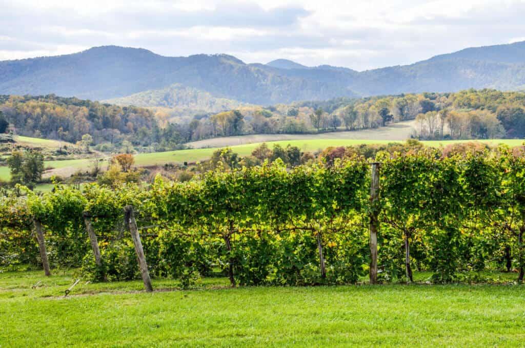 a long distance view of a Virginia vineyard.