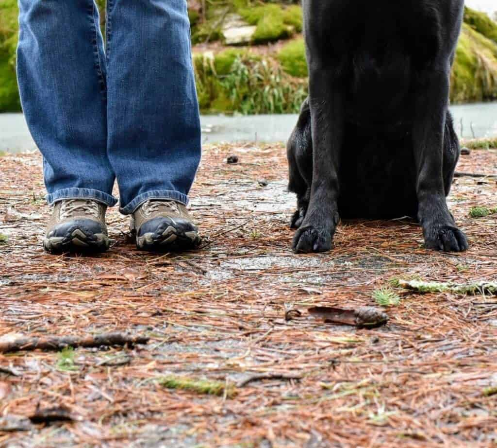Two pairs of feet - human and dog on a trail covered with leaves.